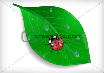 Green leaf and ladybird