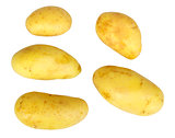 Several yellow raw potatos