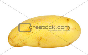 Single yellow raw potato