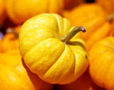 Pumpkin closeup