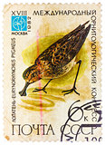 Stamp printed in USSR (Russia) shows a bird Eurynorhynchus pygme