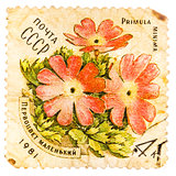 Stamp printed in USSR shows a Primula minima
