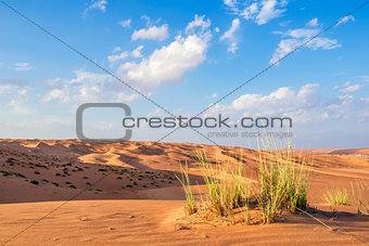 Desert gras Wahiba Oman