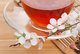 Japanese green tea and sakura branch