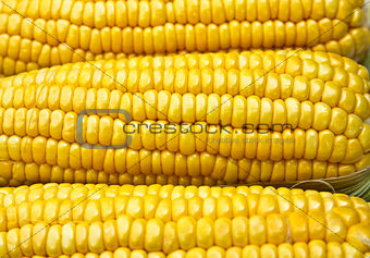 Bright color sweet corn.