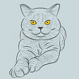 Vector British shorthair blue cat lies and looks
