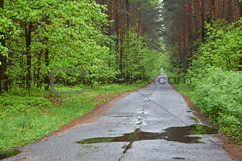 Forest road. Rainy day, spring. Poland.