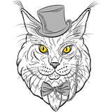 vector closeup portrait of the Maine Coon cat hipster