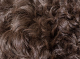 curly dog hair texture
