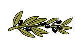 Leafy branch with ripe black olives