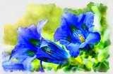 Illustration of trumpet gentiana blue spring flower in garden