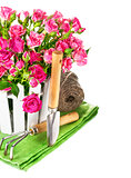 Pink roses with garden tools