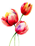 Red Tulips flowers