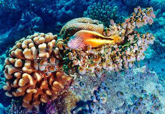 Amazing undersea nature