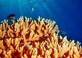 Coral underwater reef of Maldives island