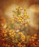 Rowanberry grunge background