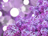 Abstract background with puple lilac