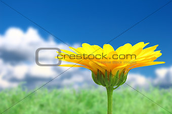 Background with orange flower on sky