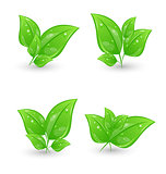 Set of green eco leaves isolated on white background