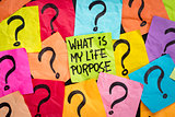 life meaning concept and purpose