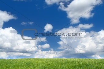 field with cumulus clouds