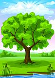 Summer landscape with old tree and sky vector illustration