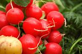 fresh radish on vegetables background