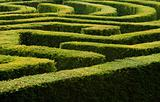 Complex hedge maze