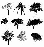 treeslibrary 1_1