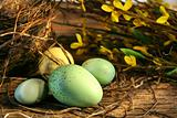 Easter eggs laying on barn wood