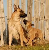 mother and puppy dogs
