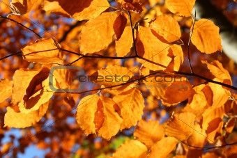 bright vivid fall leaves