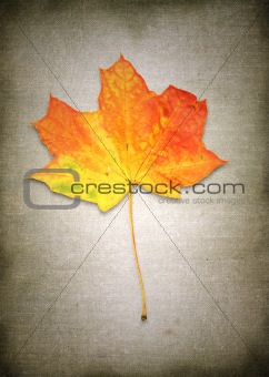 maple leaf against retro background