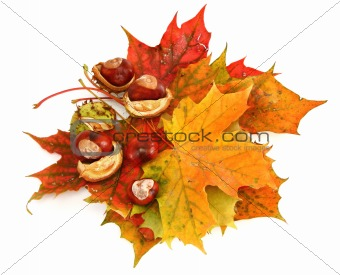 maple leaves and chestnuts