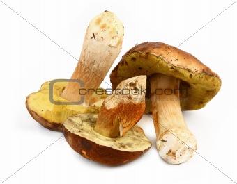 Three various boletus mushrooms