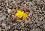 autumn individuality