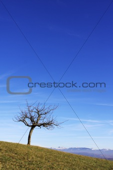 Single lone tree & blue sky