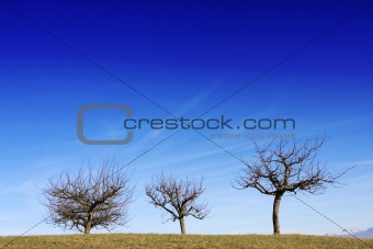 Three tress against blue sky