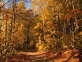 Autumn path in wood.