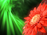 Red flower on green backdrop