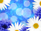 Background with daisies and cornflowers