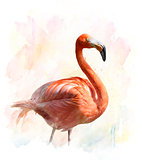Flamingo - Watercolor Illustration