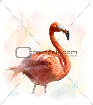 Flamingo - Watercolor Illustration
