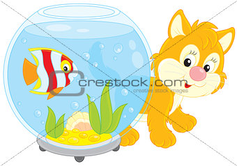 Kitten playing with an aquarium fish