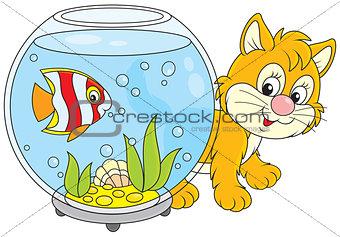 Kitten playing with an aquarium fish
