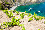 vineyard on Cap de Peyrefite near Cerbere, Languedoc-Roussillon,