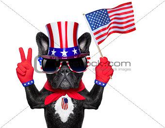 american dog