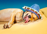 drunk mexican dog