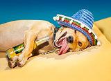 drunk mexican dog