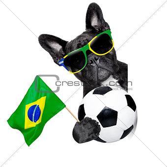 brazil soccer dog